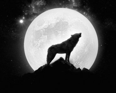 Top 10 Werewolf Books of 2015