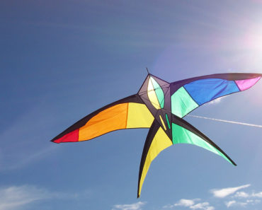 Top 10 Books about Kites