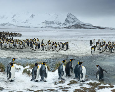 Top 10 Books on South Georgia and The South Sandwich Islands