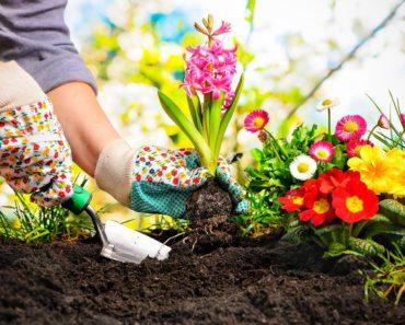 Popular Books on Gardening